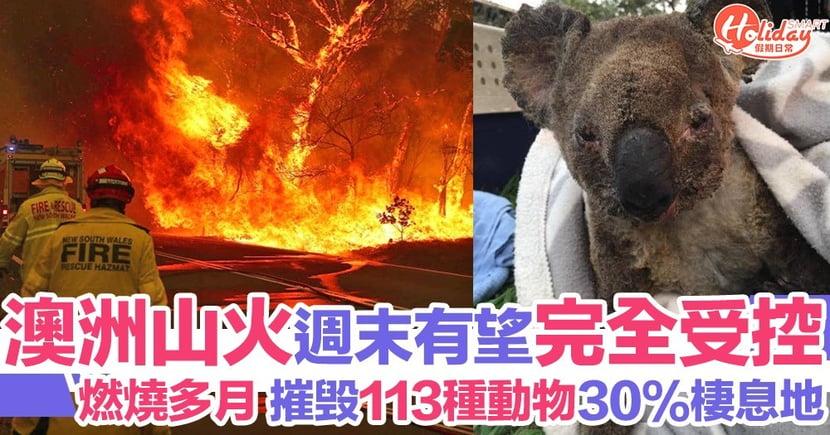 澳洲山火週末前有望完全受控!113種動物被摧毁棲息地需救援保育