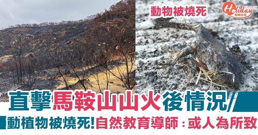【馬鞍山山火】直擊馬鞍山山火後情況!動植物被燒死 自然教育導師:或人為所致