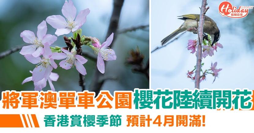 【賞花好去處2020】將軍澳單車公園櫻花陸續開花!預計4月開滿