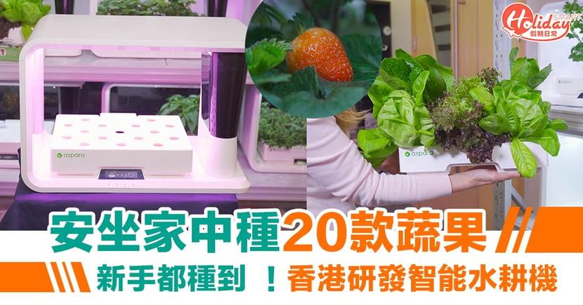 安坐家中種20款蔬果!新手都種到  香港研發智能水耕機