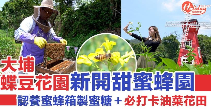大埔蝶豆花園新開「甜蜜蜂園」可以認養蜜蜂箱製蜜糖+必打卡油菜花田
