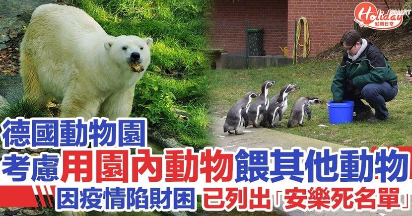 德國動物園因疫情陷財困 考慮用園內動物餵飼其他動物