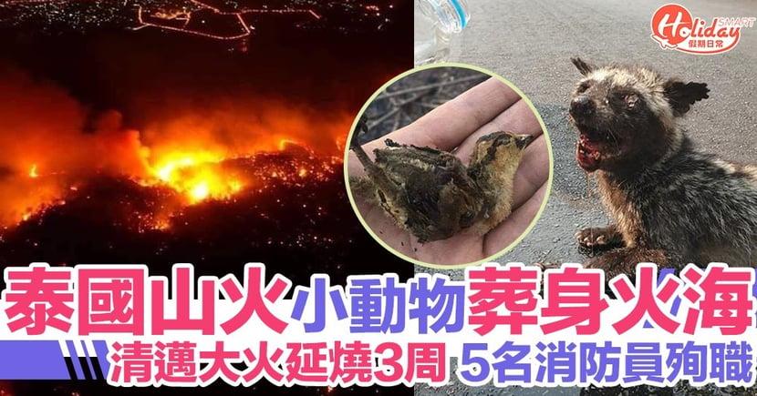 泰國清邁山火持續3星期!5名消防員殉職 大量小動物葬身火海