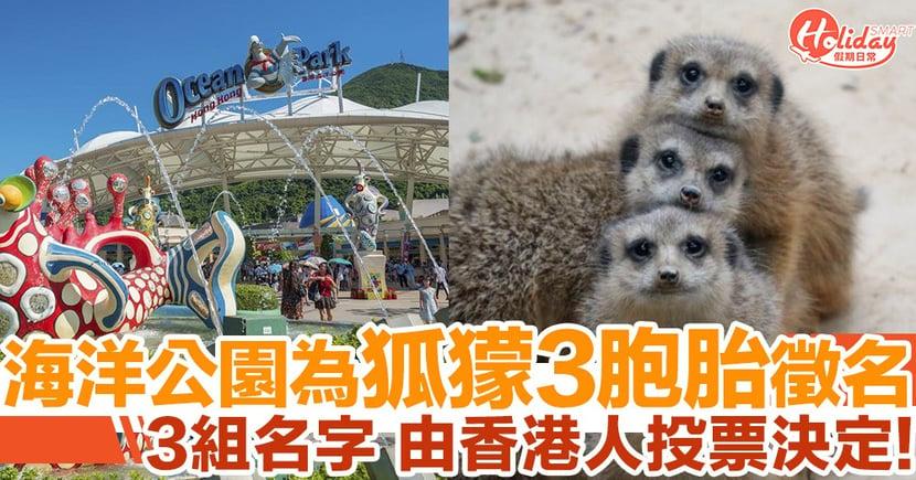 海洋公園為狐獴3胞胎徵名!即日起至6月28日香港市民可投票!