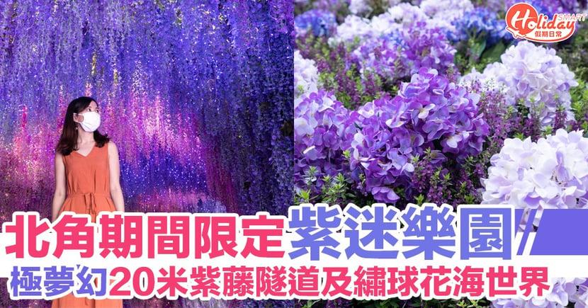 北角期間限定紫迷樂園 極夢幻20米紫藤隧道及繡球花海世界
