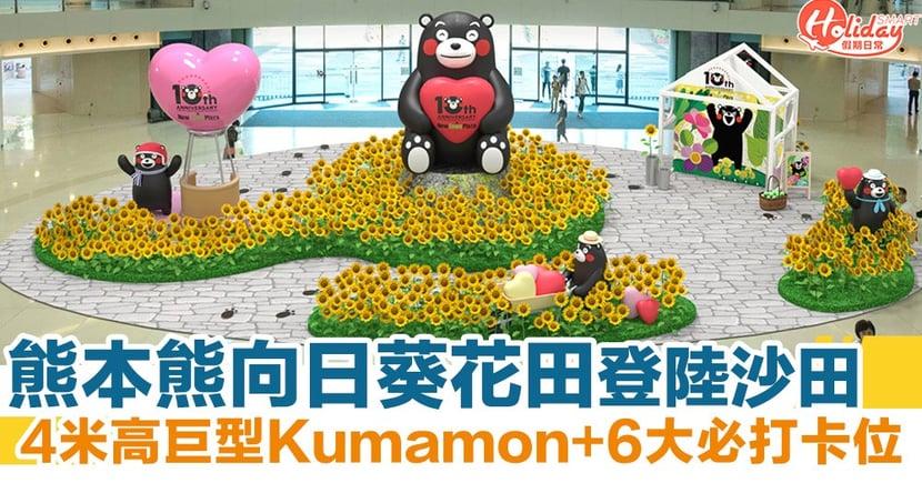熊本熊Kumamon向日葵花田登陸沙田!4米高巨型Kumamon+6大必打卡位~