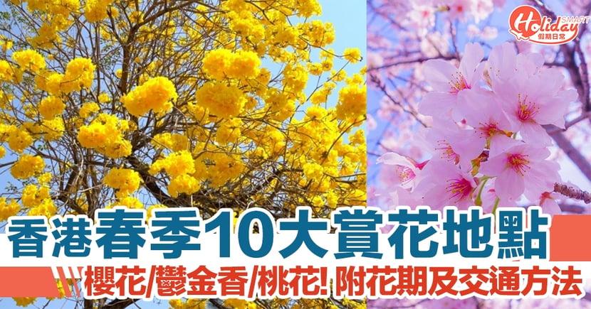 香港春季10大賞花地點 櫻花/桃花/鬱金香都有得睇!