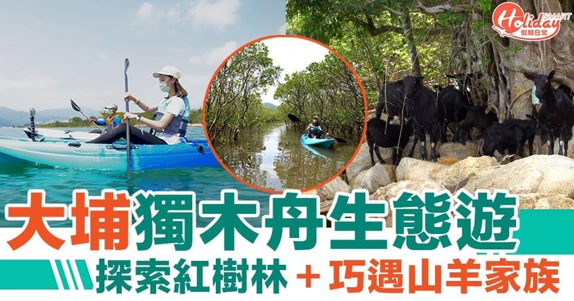 大埔好去處 大埔獨木舟生態遊 探索紅樹林+巧遇山羊家族
