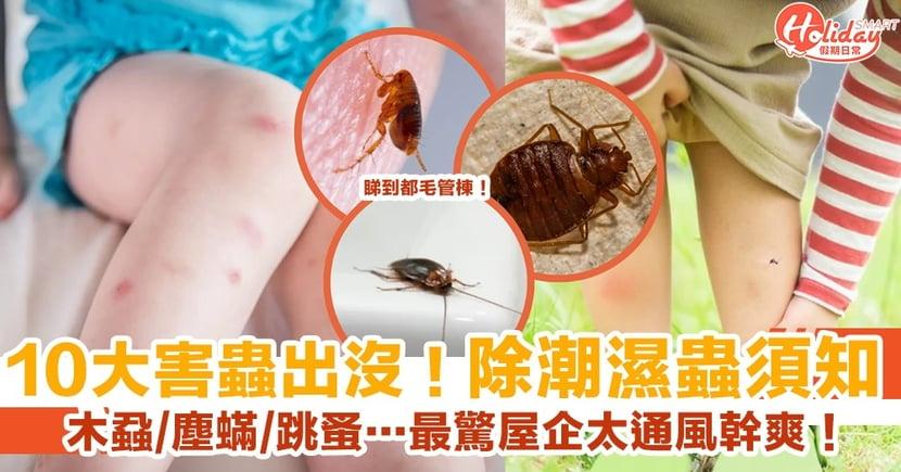 【除潮濕蟲】潮濕天10大害蟲出沒!家居防治蚊蟲須知!木蝨、塵蟎、跳蚤…最驚你屋企太通風幹爽!