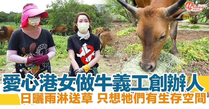 熱心牛義工不忍牛牛捱餓食垃圾!無懼每周日曬雨淋  號召網民西貢送草