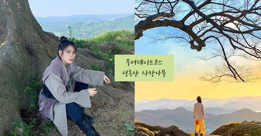 韓劇打卡景點「聖興山城愛情樹」♥ 《德魯納酒店》裡張滿月喜愛的大樹!超好拍還可以看夕陽~