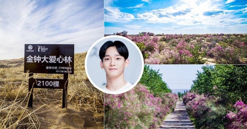 """見證粉絲的愛!EXO成員CHEN粉絲兩年前種植2100棵樹苗的""""金鍾大愛心林"""",現在成了美麗花海~"""