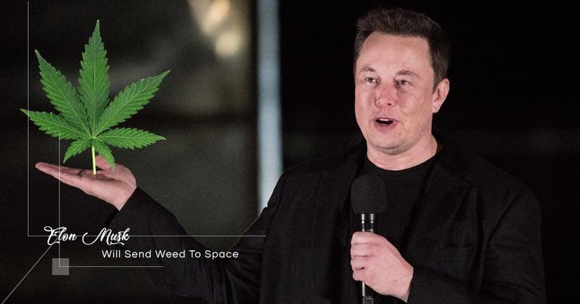 【人類福祉】Elon Musk決意研發「太空大麻」!計劃背後埋藏遠大理想!